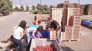 Фермеры Греции — жертвы экономической войны между Россией и США