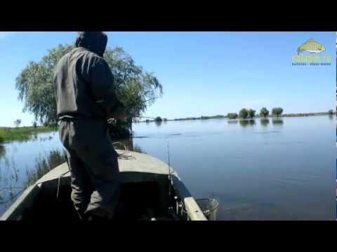 Ловля окуня в июне в Астрахани, в мошку