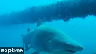Shark Cruises by Frying Pan Cam.