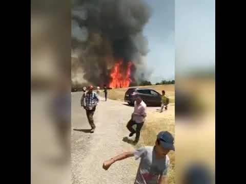 اندلاع حريق مهول بغابة إفران