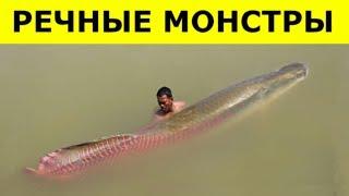 Увидев ЭТИХ МОНСТРОВ, Вы Больше НЕ ПОЛЕЗЕТЕ В РЕКУ!!!