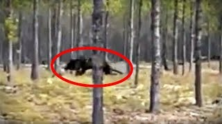 5 Mysterious Cryptid Videos You've Never Seen