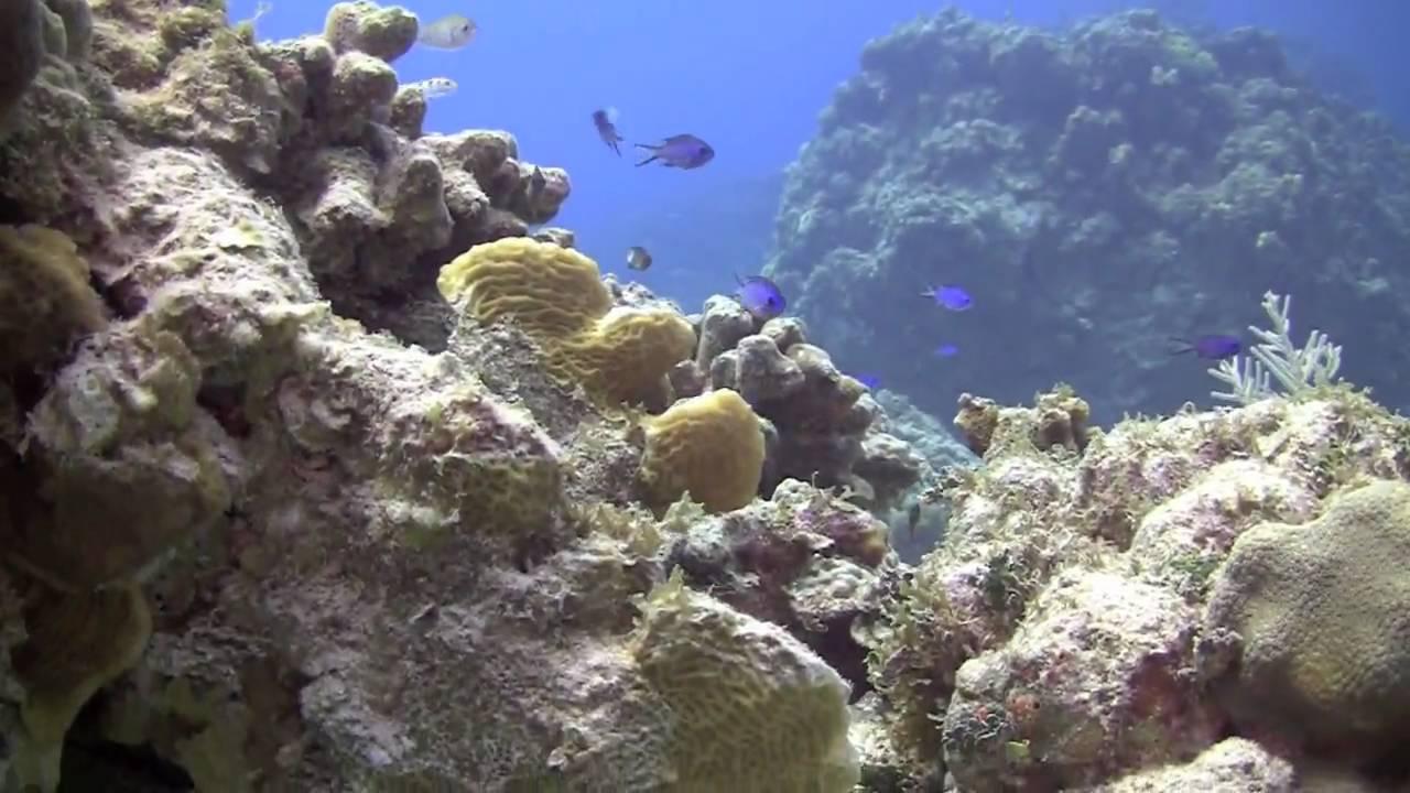 HD Scuba Diving In Grand Cayman