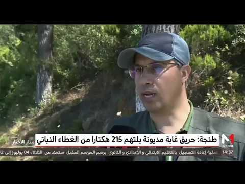 طنجة .. أكثر من 500 عنصرا من الوقاية المدنية لإخماد حرائق غابات مديونة