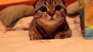 獲物を興味深く見つめる猫