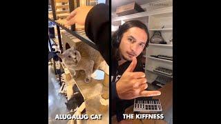 Alugalug Cat X The Kiffness (Soulful Singing Cat Live Looping Remix)