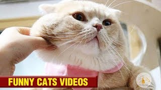 Funny Cats 2018-Super weird and funny and cute and so on compilation#81❤️