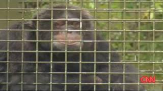 Bubbles Michael Jackson Chimp Pet