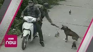 Cận cảnh cẩu tặc trộm chó chỉ trong 5 giây | VTC Now