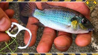 Will A Soda Tab Catch Fish IRL?