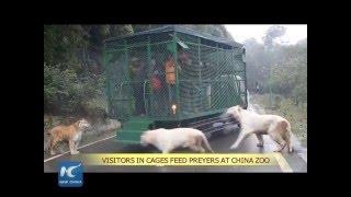 """Sửng sốt với sở thú """"nhốt người trong chuồng, thả rông thú dữ"""" ở Trung Quốc"""