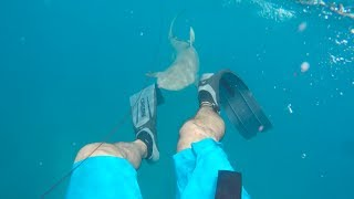 Shark Bites Spearfisherman in Florida Keys