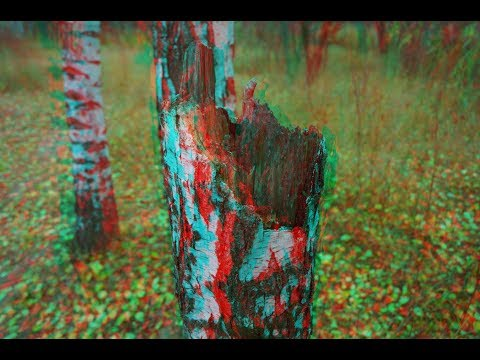 Golden Autumn 3D! 3D video! Anaglyph .