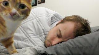 Why Do Cats Like To Sleep With Us?