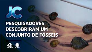 Pesquisadores descobriram um conjunto de fósseis, em Salitre
