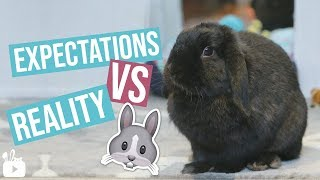 Expectations VS Reality BUNNY EDITION