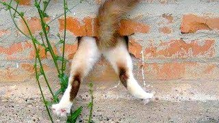 Funny CAT FAILS that will make you POOP YOUR PANTS FROM LAUGHING - Best CAT compilation