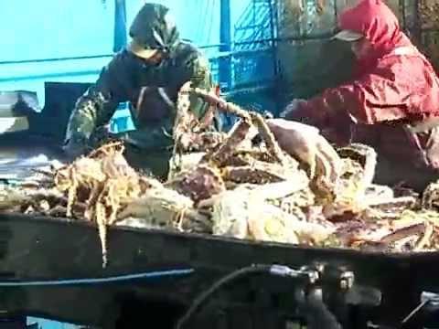 Лов камчатского краба в Беринговом море