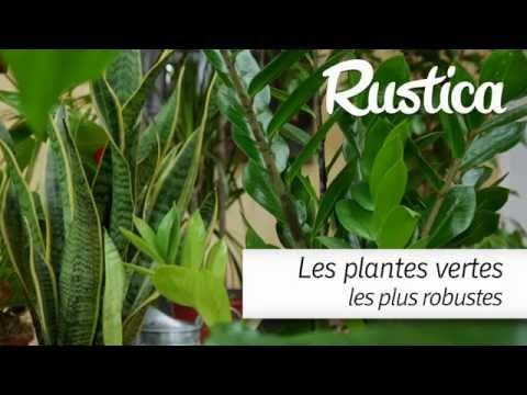 Plantes grasses aloe gymnocalycium espostoa cereus for Plantes vertes hautes