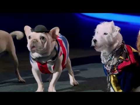 Trailer for Air Bud Entertainment's PUP STAR