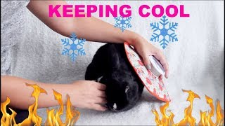 HOW TO KEEP YOUR RABBITS COOL IN THE SUMMER