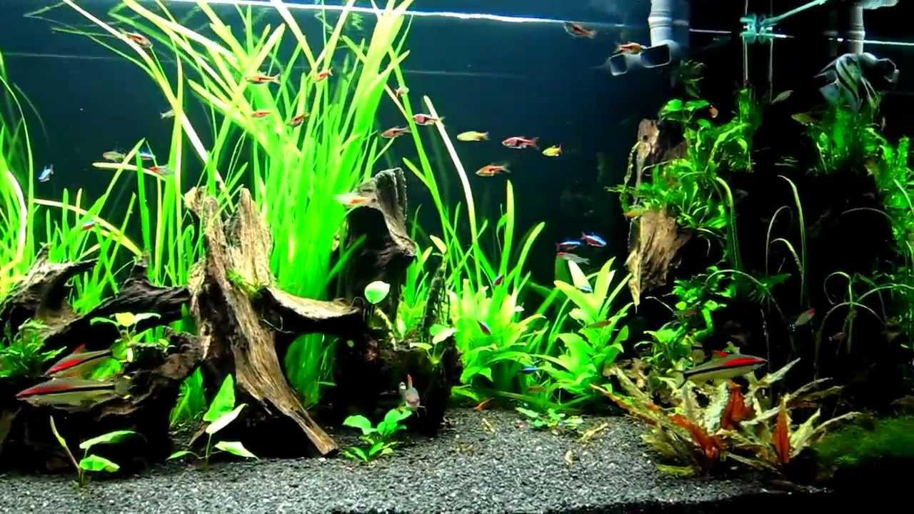 Planted Community Aquarium Fluval Profile 1500 1