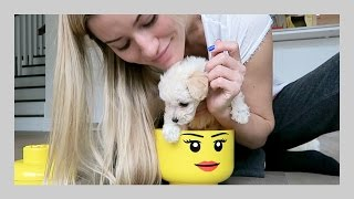 Putting doggy in things | iJustine