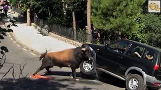 Stupid Humans vs Smart Wild Animals 7