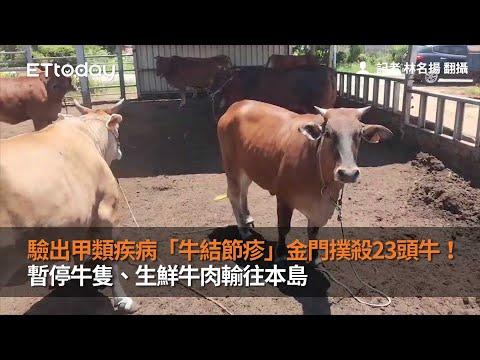 驗出甲類疾病「牛結節疹」...金門撲殺23頭牛!暫停牛隻、生鮮牛肉輸往本島