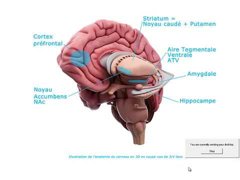 Addiction au tabac : Aspects neurobiologiques et comportementaux. Fares Mili (Tunis)