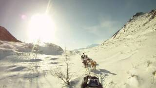 Mushing tranquille en montagne