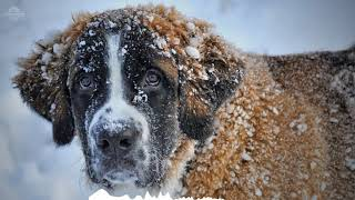 1 hour Sleep and relax Music For Dogs, Cats & All Pets, Stress Relief, Anxiety Healing Music 0043