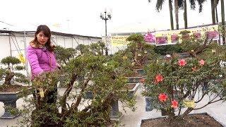 Báo giá loạt cây hiếm, pha hạ giá chưa từng có - Price of bonsai trees in My Dinh, Tu Liem, Ha Noi
