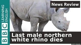 BBC News Review: Last male northern white rhino dies