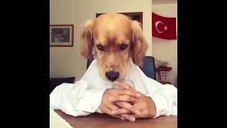 Funny cats and dogs - Try not to laugh - Compilation 2018
