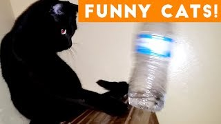 Try Not To Laugh At This Funny Cat Video Compilation   Funny Pet Videos 😹😺🙀