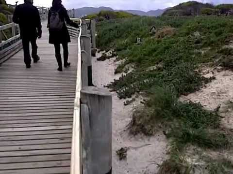 Cape Town Site Inspection -Penguins
