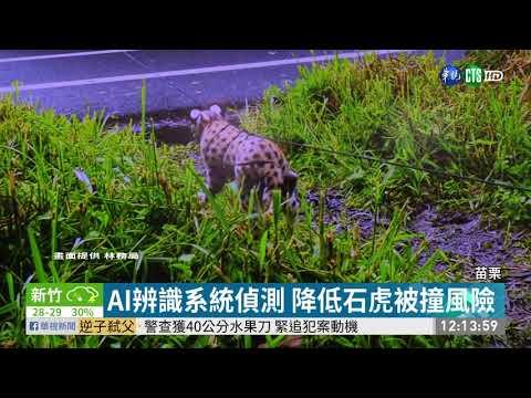 石虎保育條例闖關失敗 動保人士失望| 華視新聞20190604