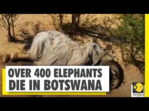 More than 360 elephants found dead in Botswana, heart wrenching pics