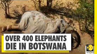 More than 360 elephants found dead in Botswana, heart wren..