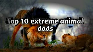Top 10 most extreme animal dads in the animal kingdom