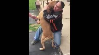 Incredible Moment Dog Reunited With Owner After Two Years