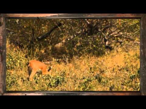 Steenbok - African Sky