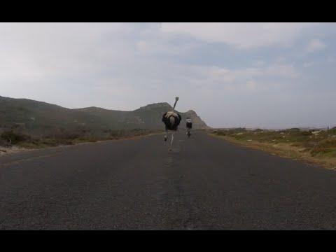 Noj juri bicikliste