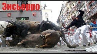 Видео самого безумного шоу - энсьерро ( бег разъяренных быков) в Испании