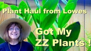 Plant Haul from Lowes - I Got My ZZ Plants!