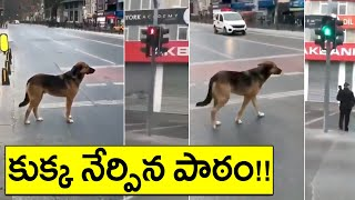 Viral Video: Dog Following Traffic Rules..
