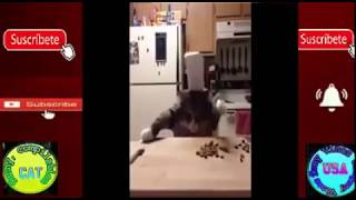 unny cat videos  Try Not To Laugh Challenge funny cats funny cat funny cat videos ETSlNaG bQ4