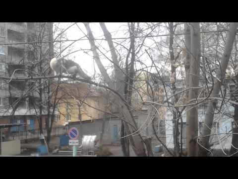 Vrana i mačka
