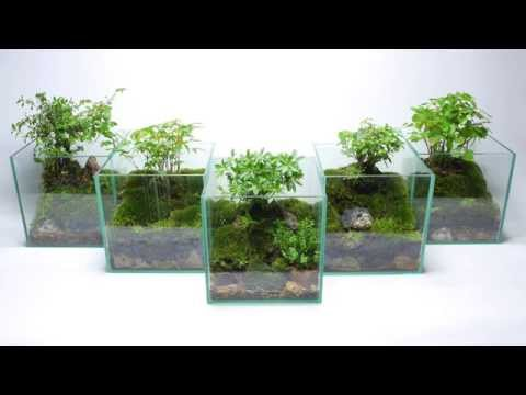 how to build an aqua terrarium